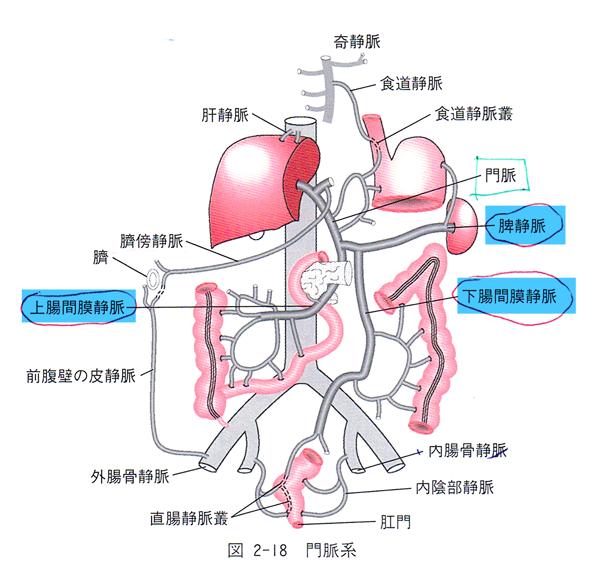 (19) 門脈ー体循環吻合に関与するのはどれか。